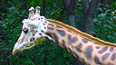 Giraffe Cam Barn, South Carolina